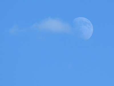 A small, puffy white cloud and moon in front of clear blue sky.