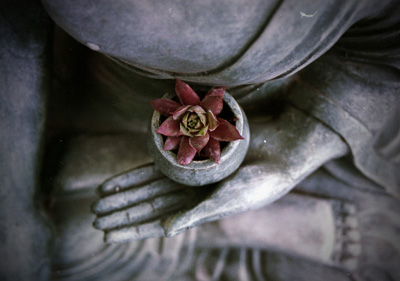 Buddha hand holding a bowl, with a flower inside.