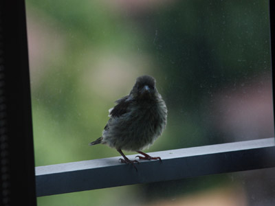 A bird standing at a window.