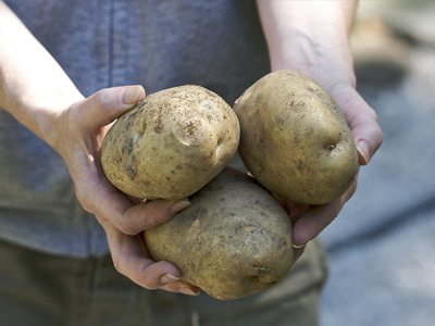A person holding three potatoes.