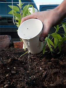 A hand holding a cup of water, pouring it onto seeds.