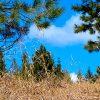 Un brillante cielo azul y la hierba seca del invierno en un campo en la Abadía.