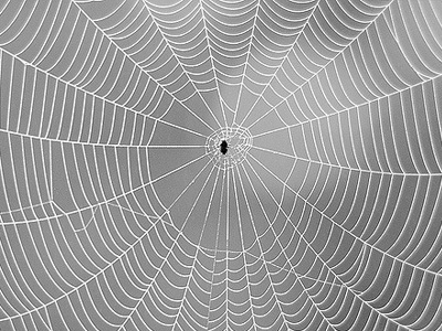 Big spiderweb with spider in middle.